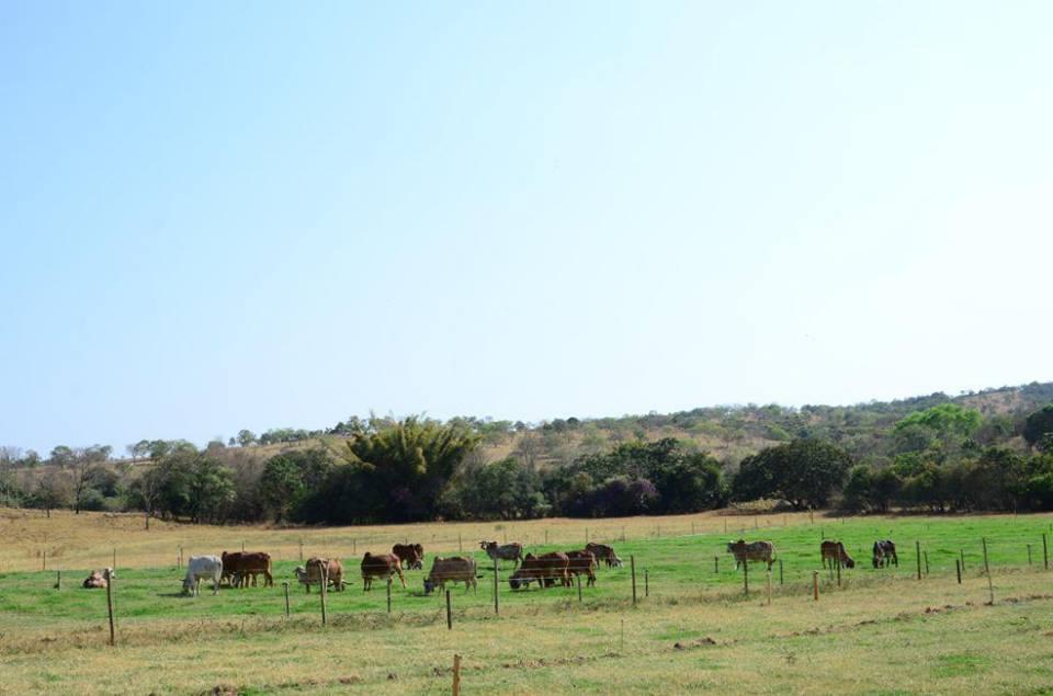 Fazenda Rancho Fundo das Grotadas